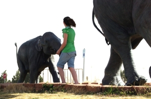 what elephants...  ?