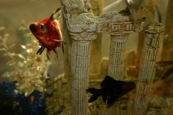Fish 20040048