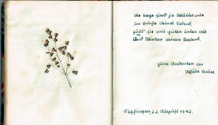 Diary 27