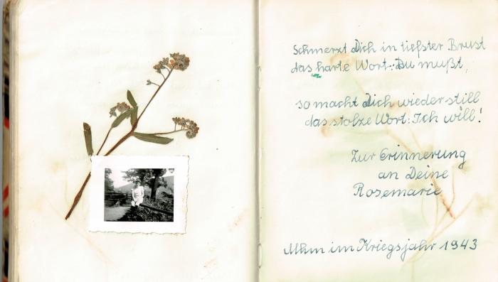 Diary 29