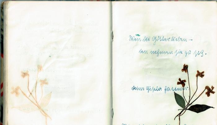 Diary 30